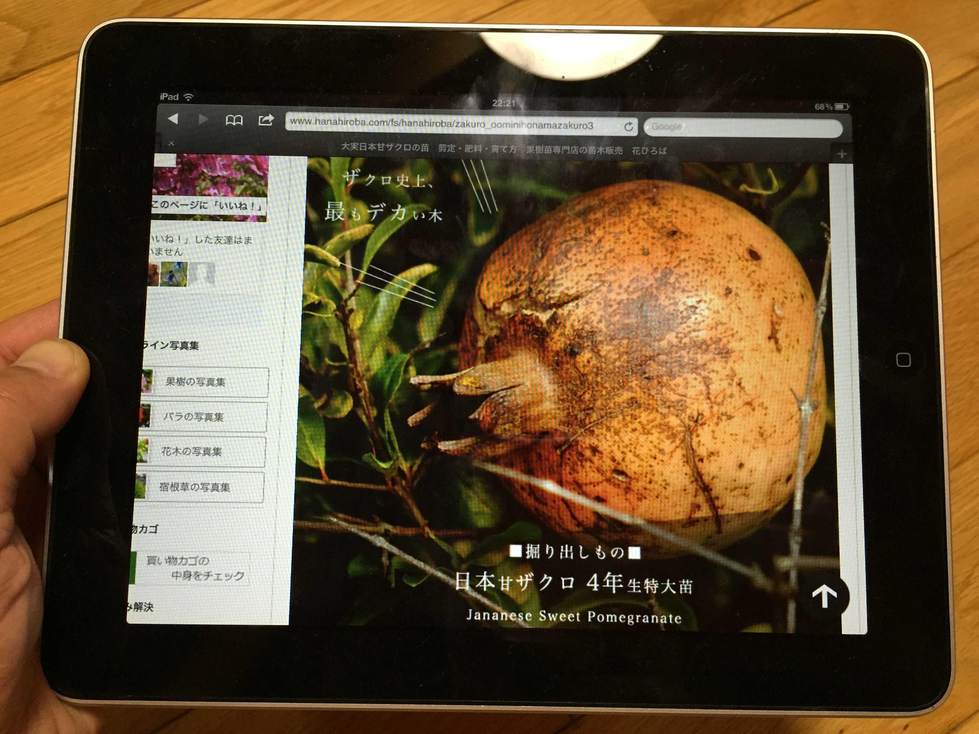日本甘ザクロ(Japanese Sweet Pomegranate)