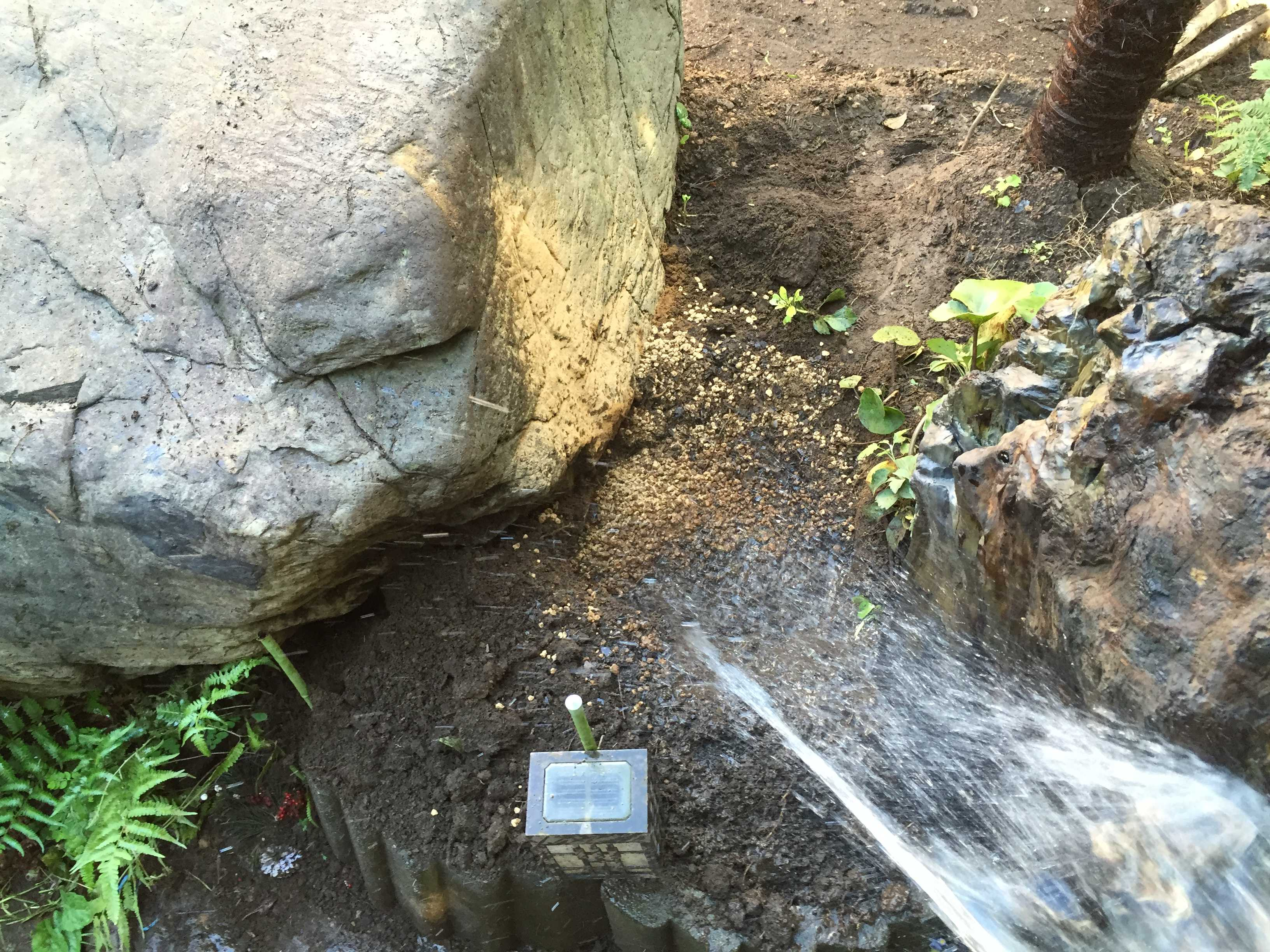 サルスベリ夏祭り(ペパーミントレース)の水やり