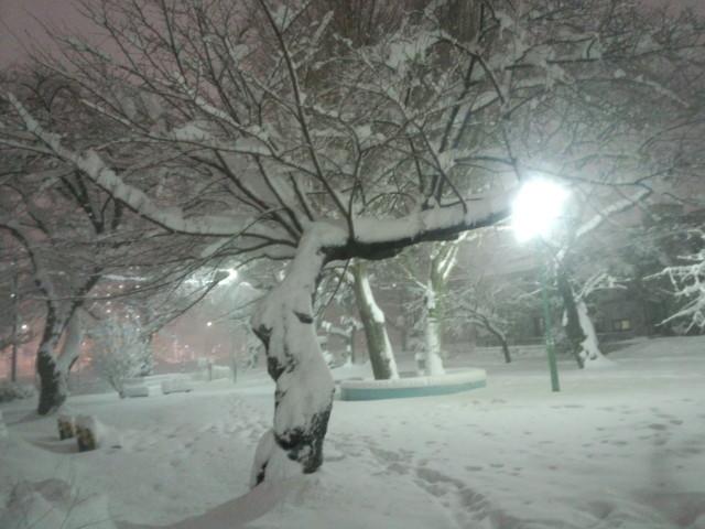大雪の日のタコ公園(明神町)