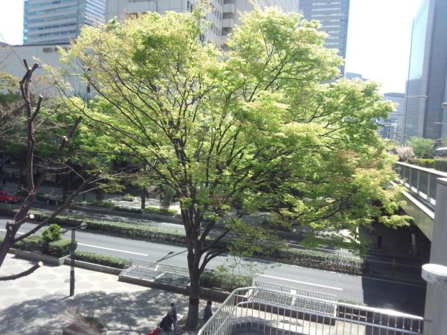 新宿西口 新宿中央通りの緑