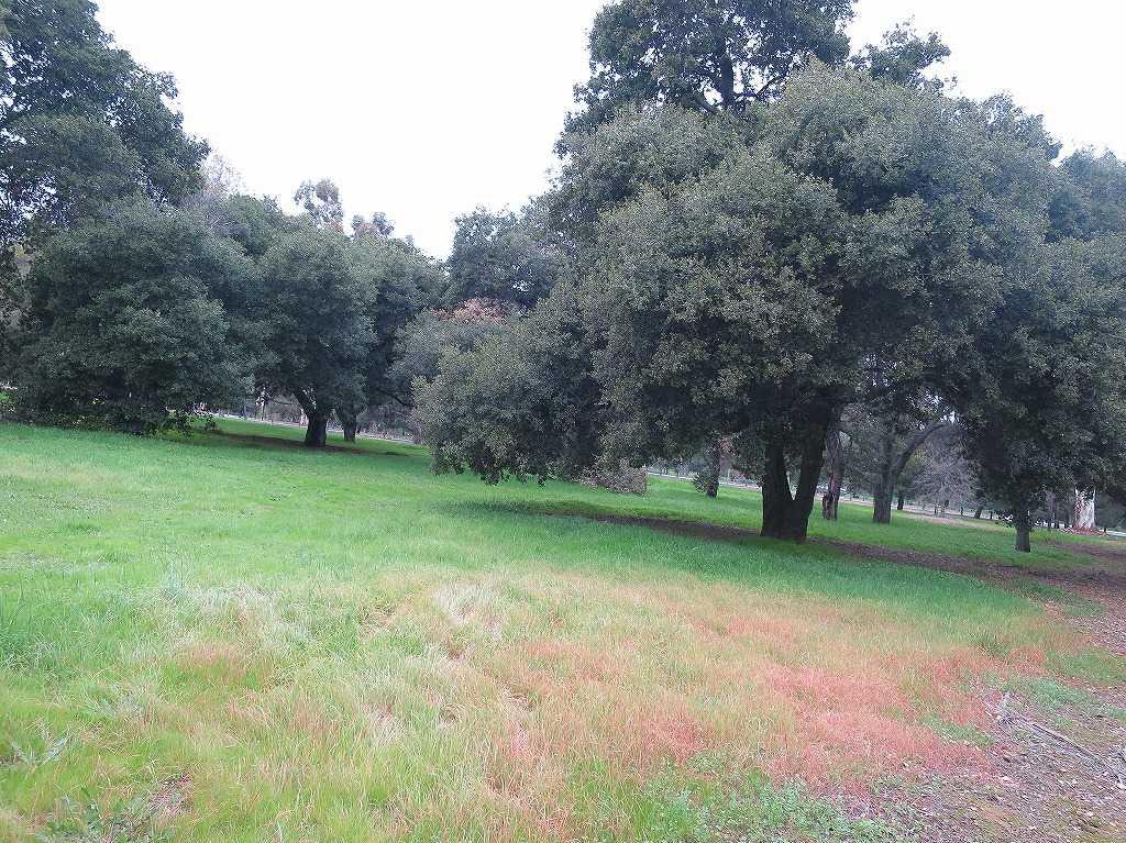 スタンフォード大のキャンパス