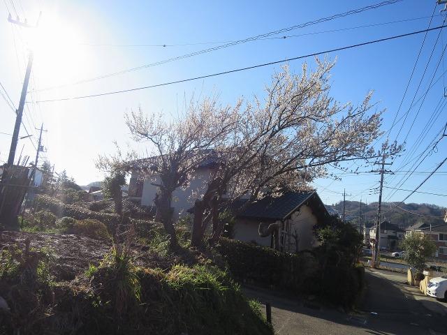 斜めに伸びる梅