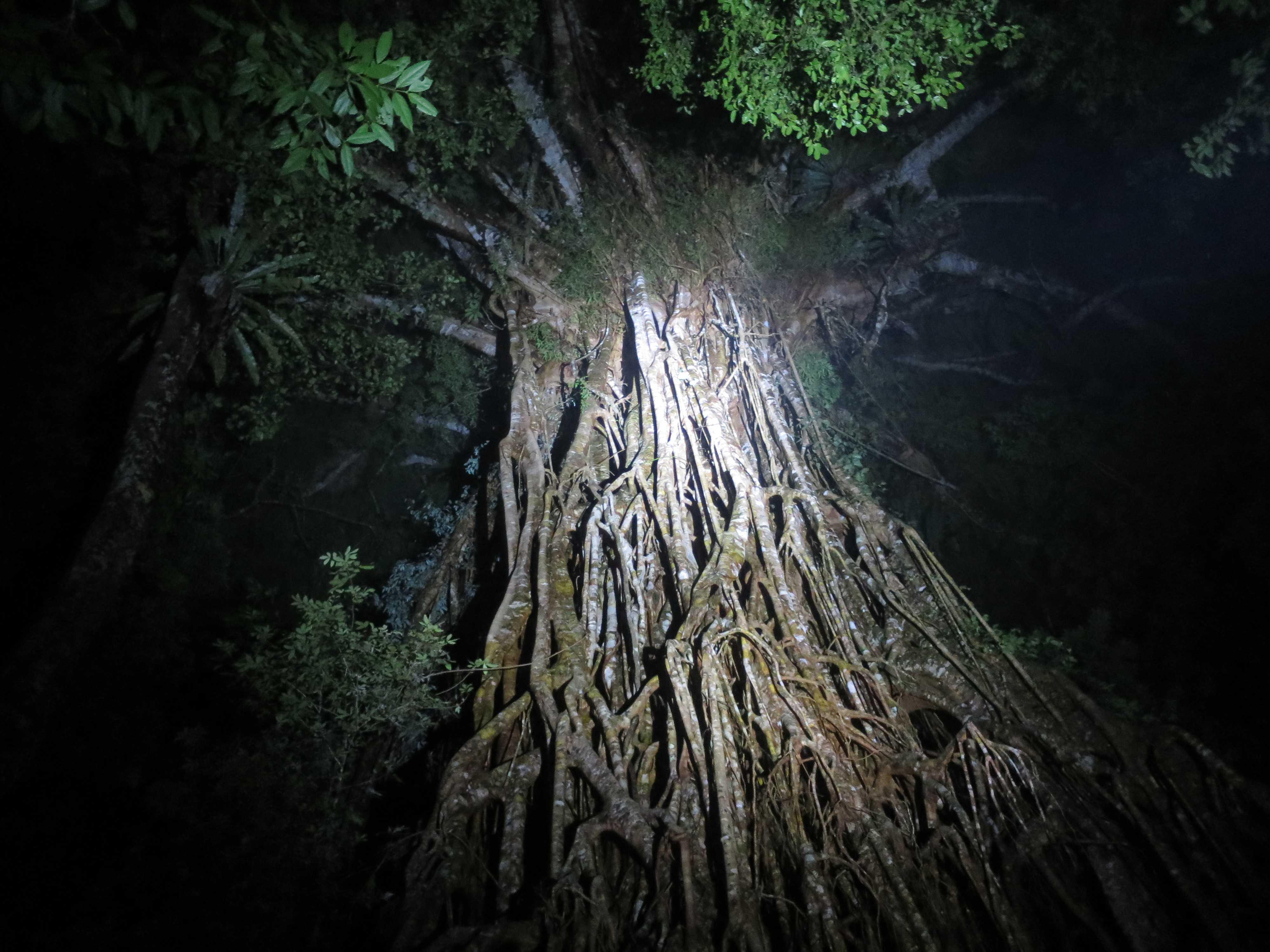 天を衝くような聖堂の樹
