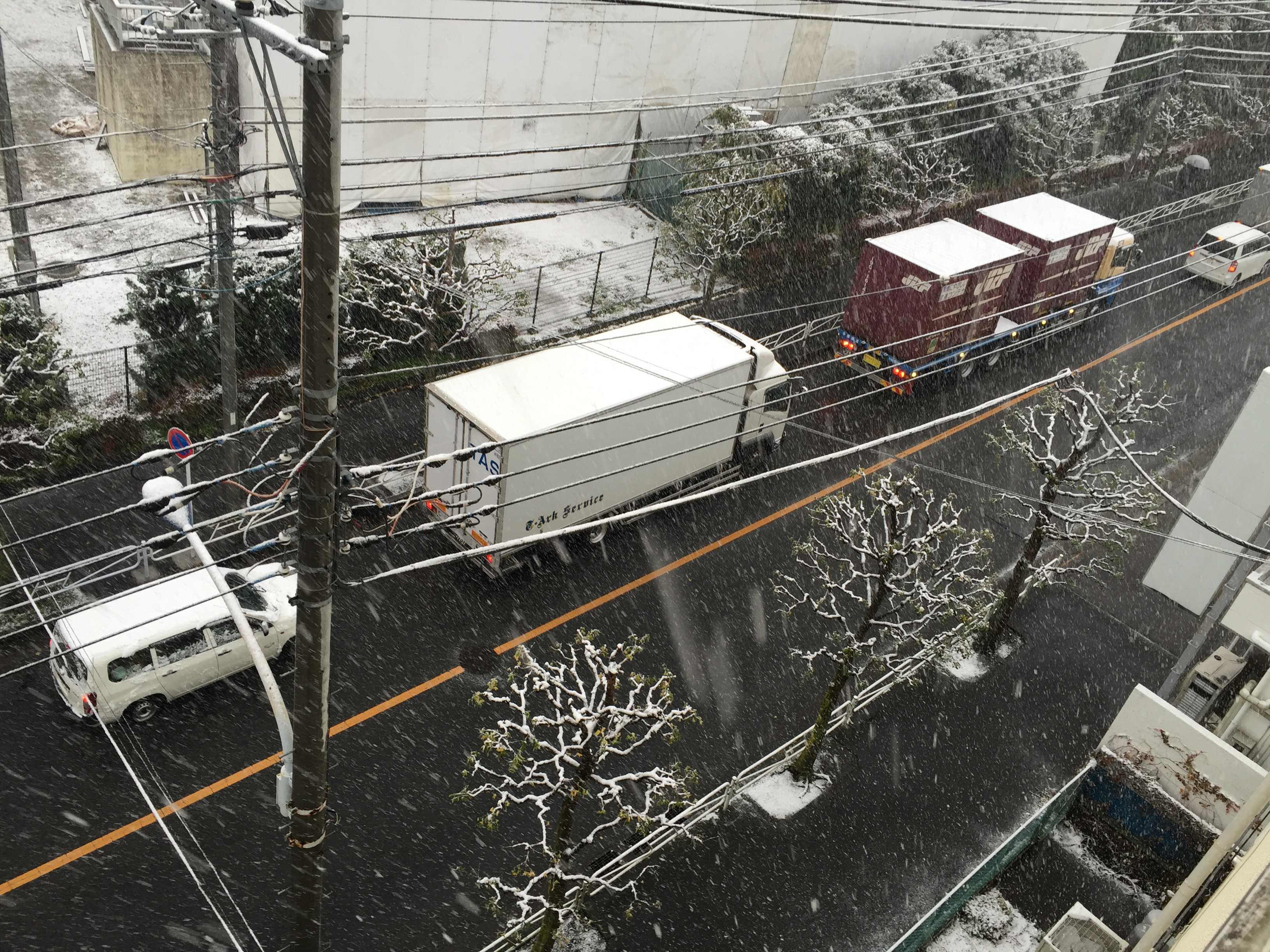 11月初雪(東京都八王子市)