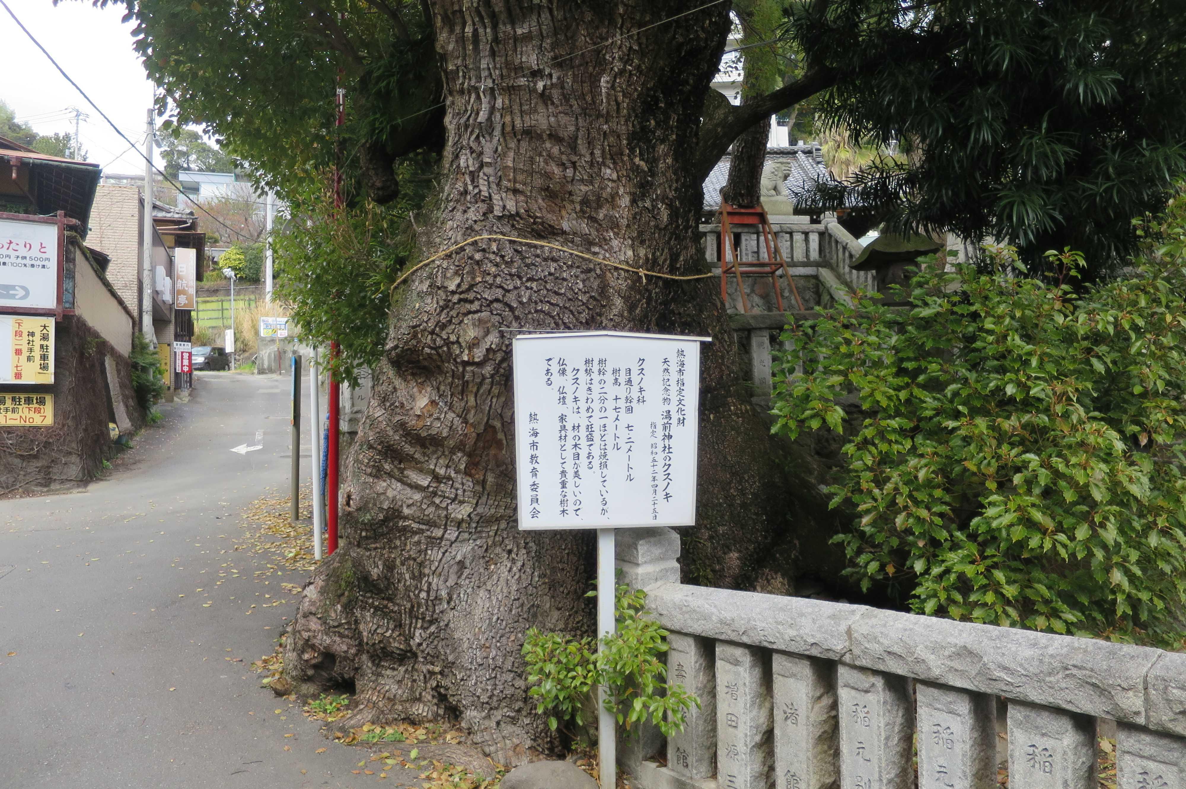 湯前神社のクスノキ