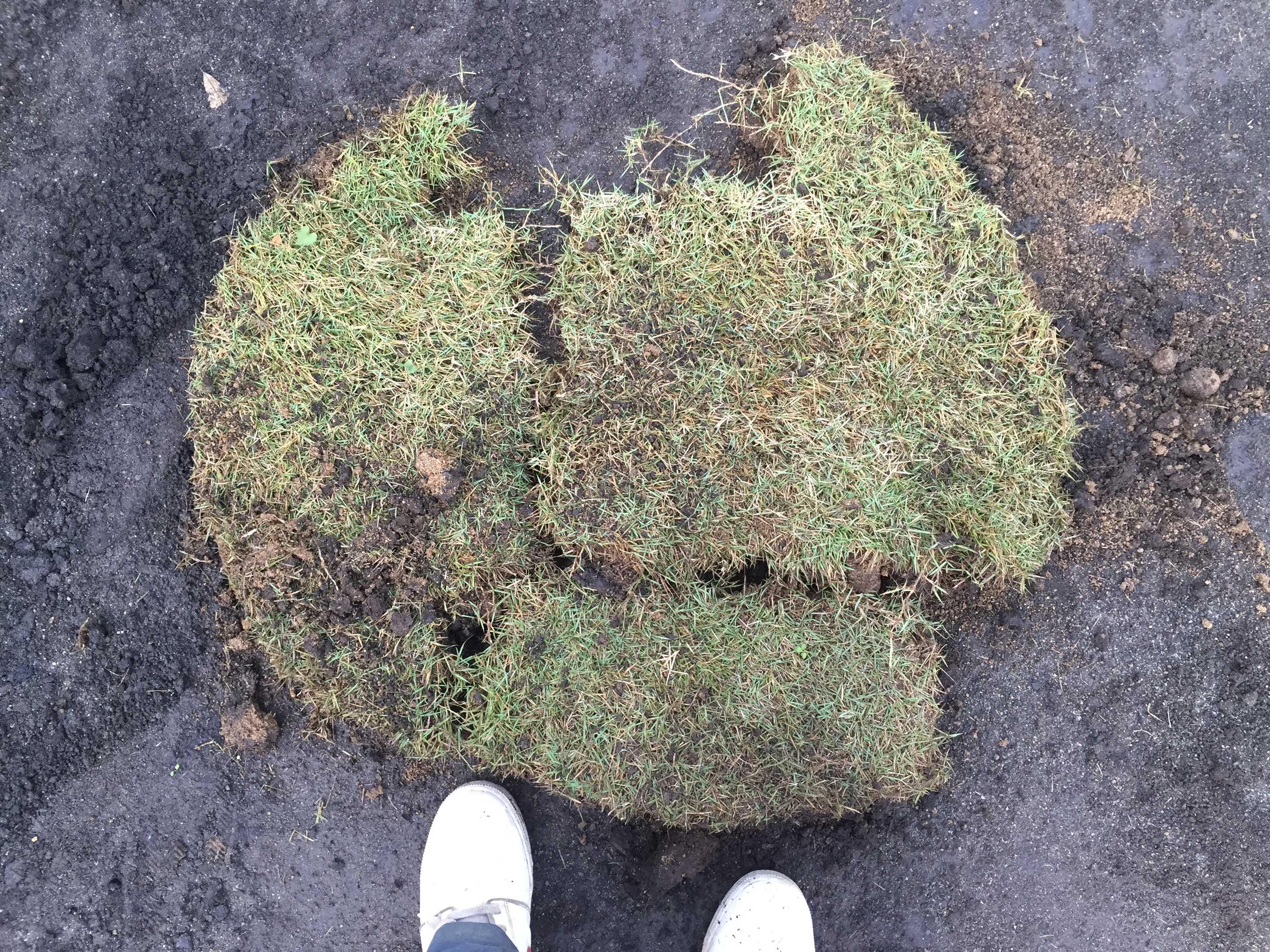 剥がした芝生/切り取った芝生