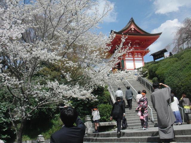サクラ満開の京都・清水寺