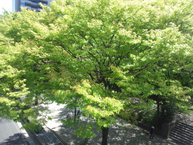 新宿中央通りの木々の緑