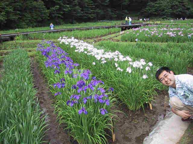 青梅「吹上しょうぶ公園」の紫と白の花しょうぶ
