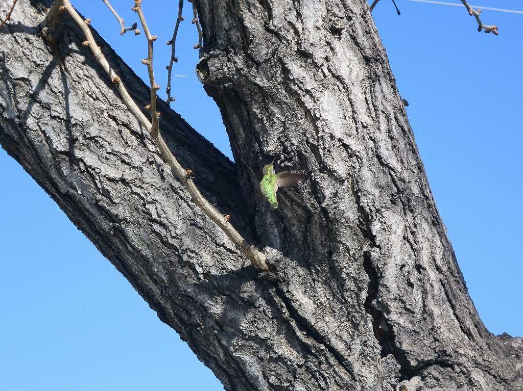 サラトガ・アベニュー - 緑の鳥