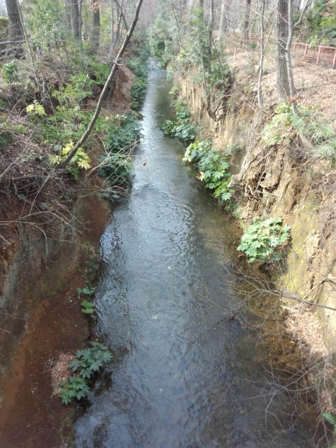 玉川上水 (西中島橋から撮影)