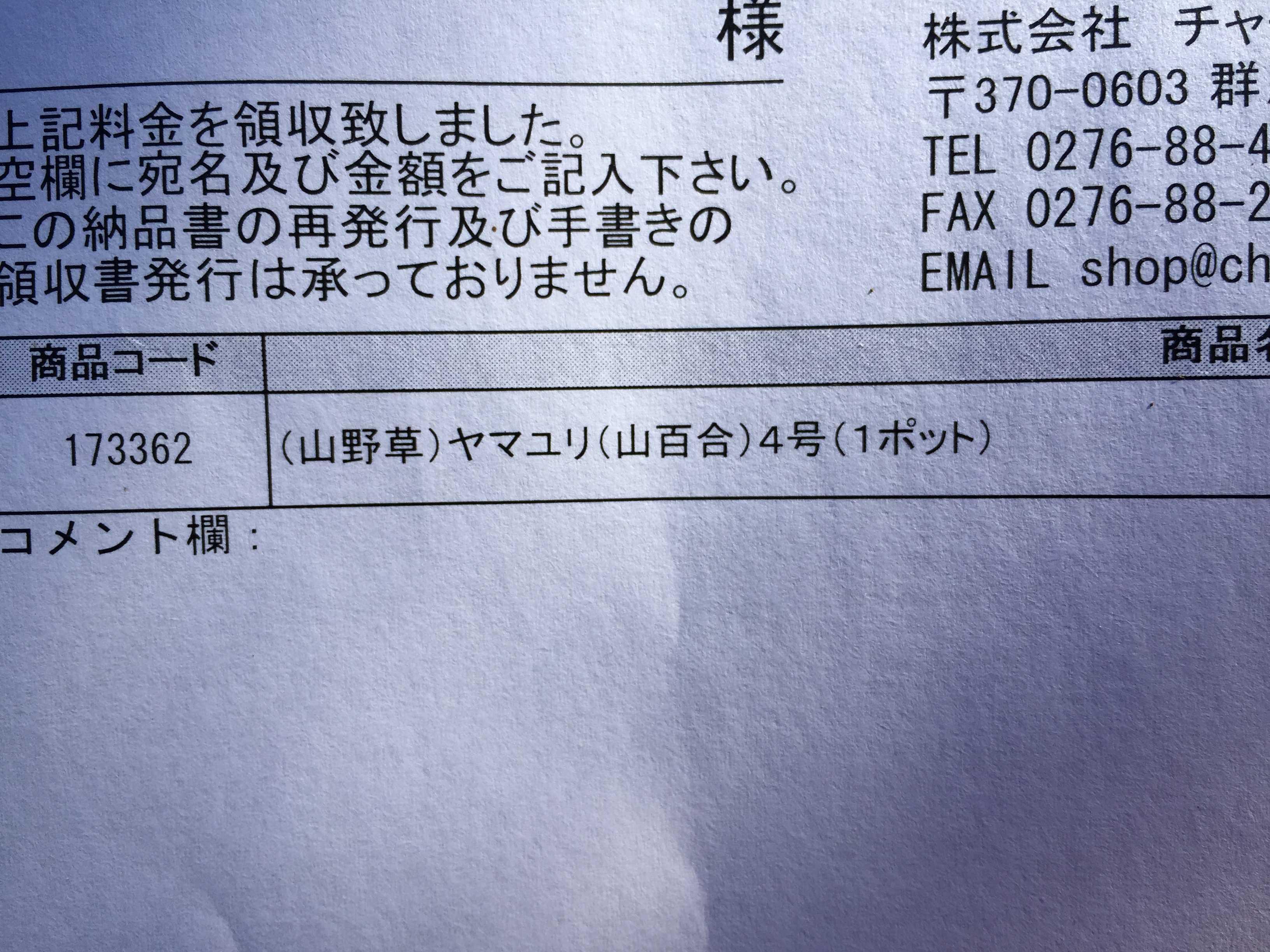 ヤマユリ庭植え - (山野草) ヤマユリ/山百合 4号ポット