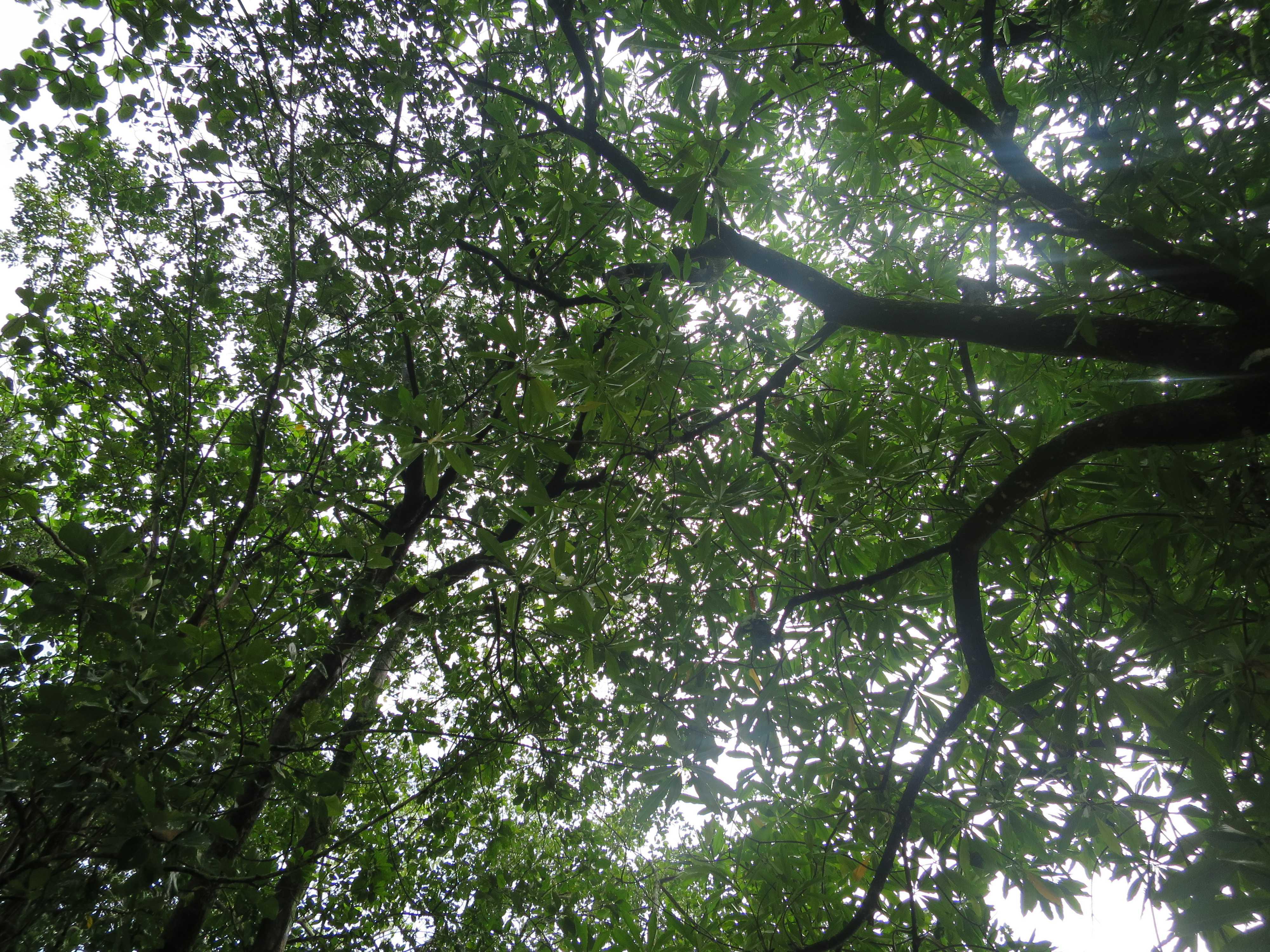 グリーン島 木