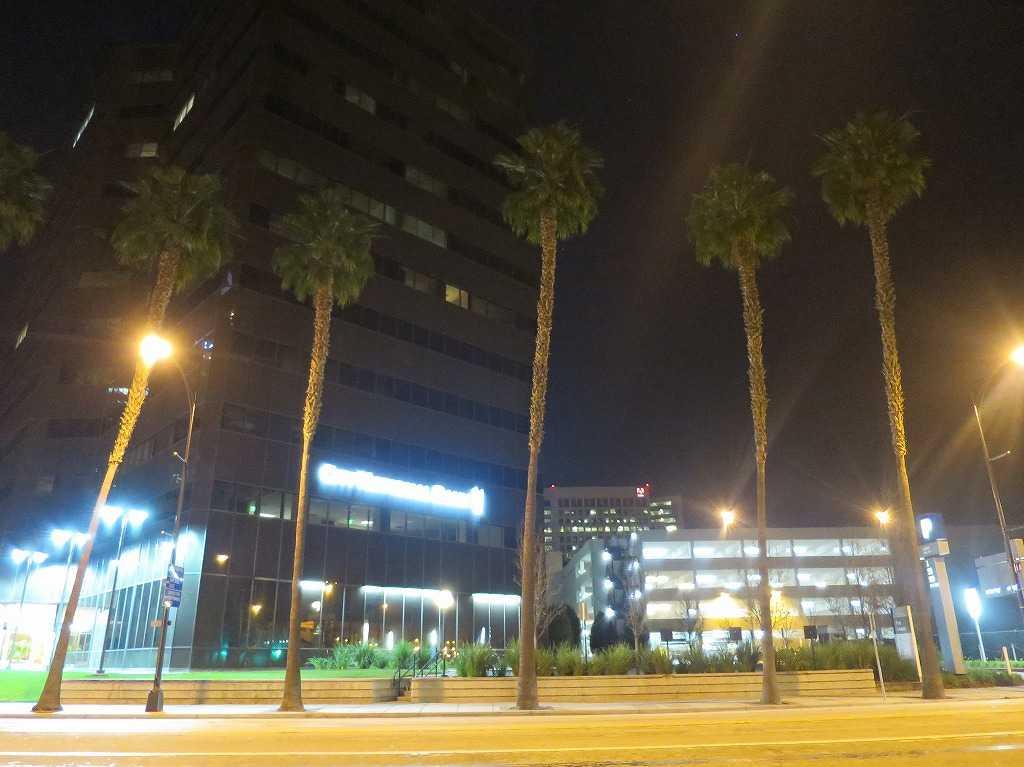 サンノゼ - 椰子の木の街路樹