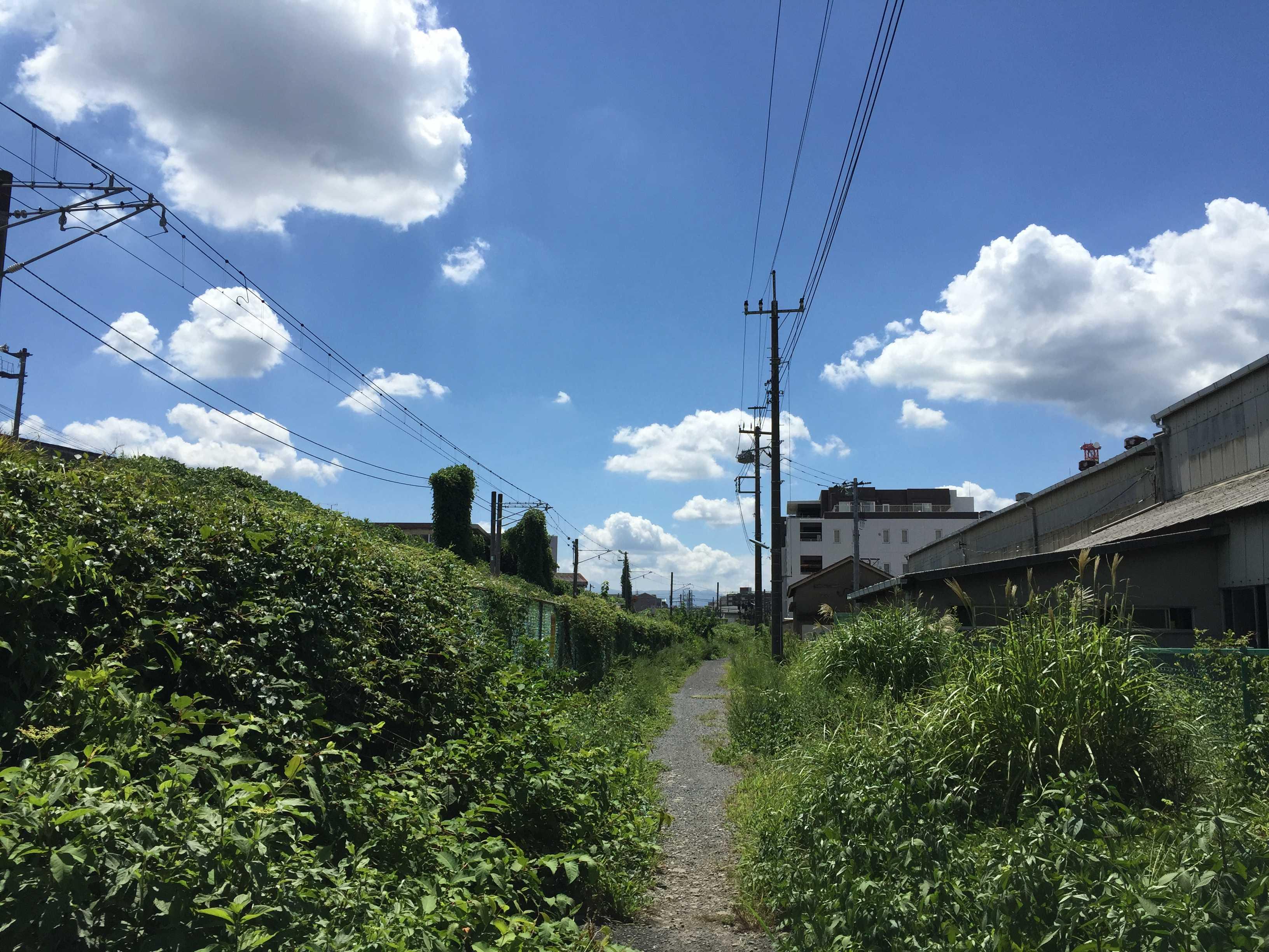 夏の青い空と白い雲と緑の草
