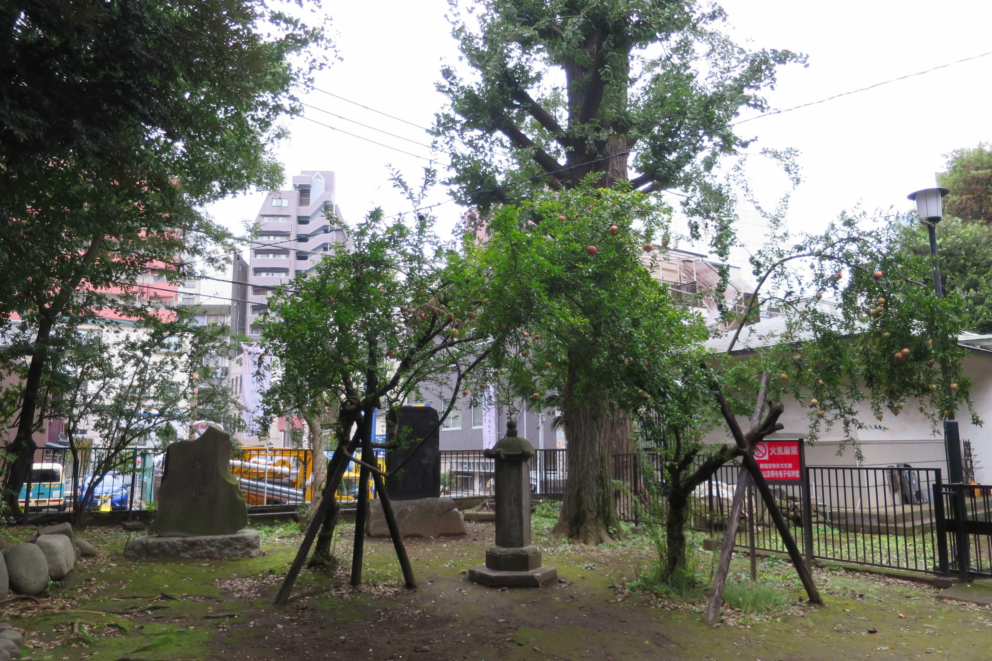 東京 雑司が谷・鬼子母神堂 - お堂の横のざくろの木