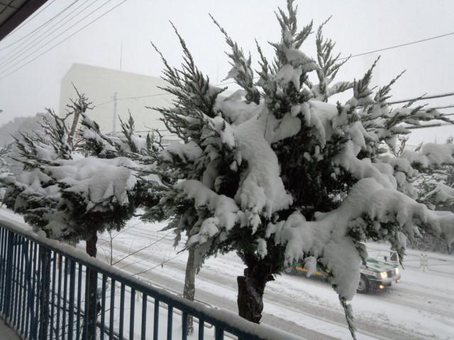 ムラウチドットコム本社入口の雪