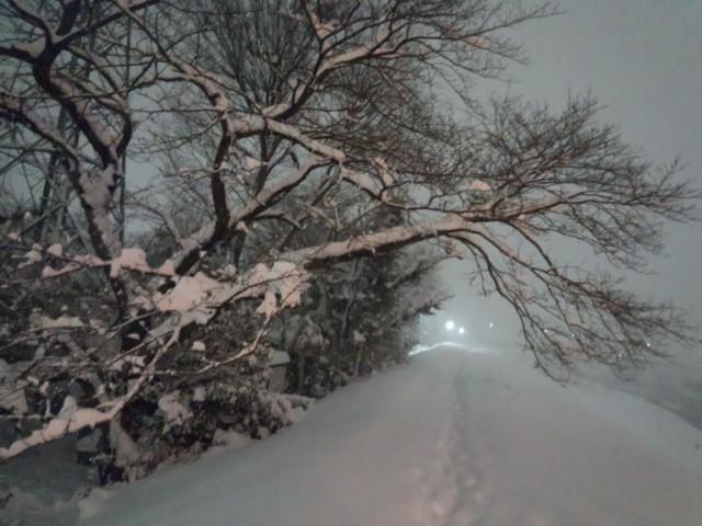 大雪と桜(さくら)の木