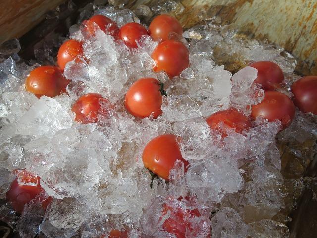 高知・日曜市の冷えたトマト