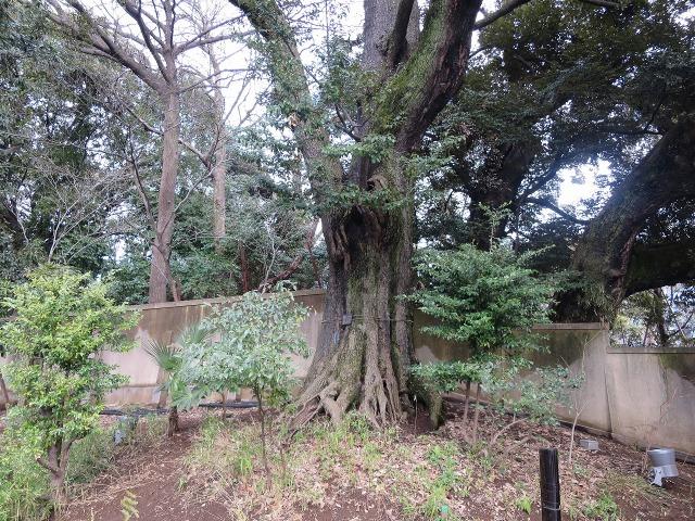 東京都庭園美術館の木