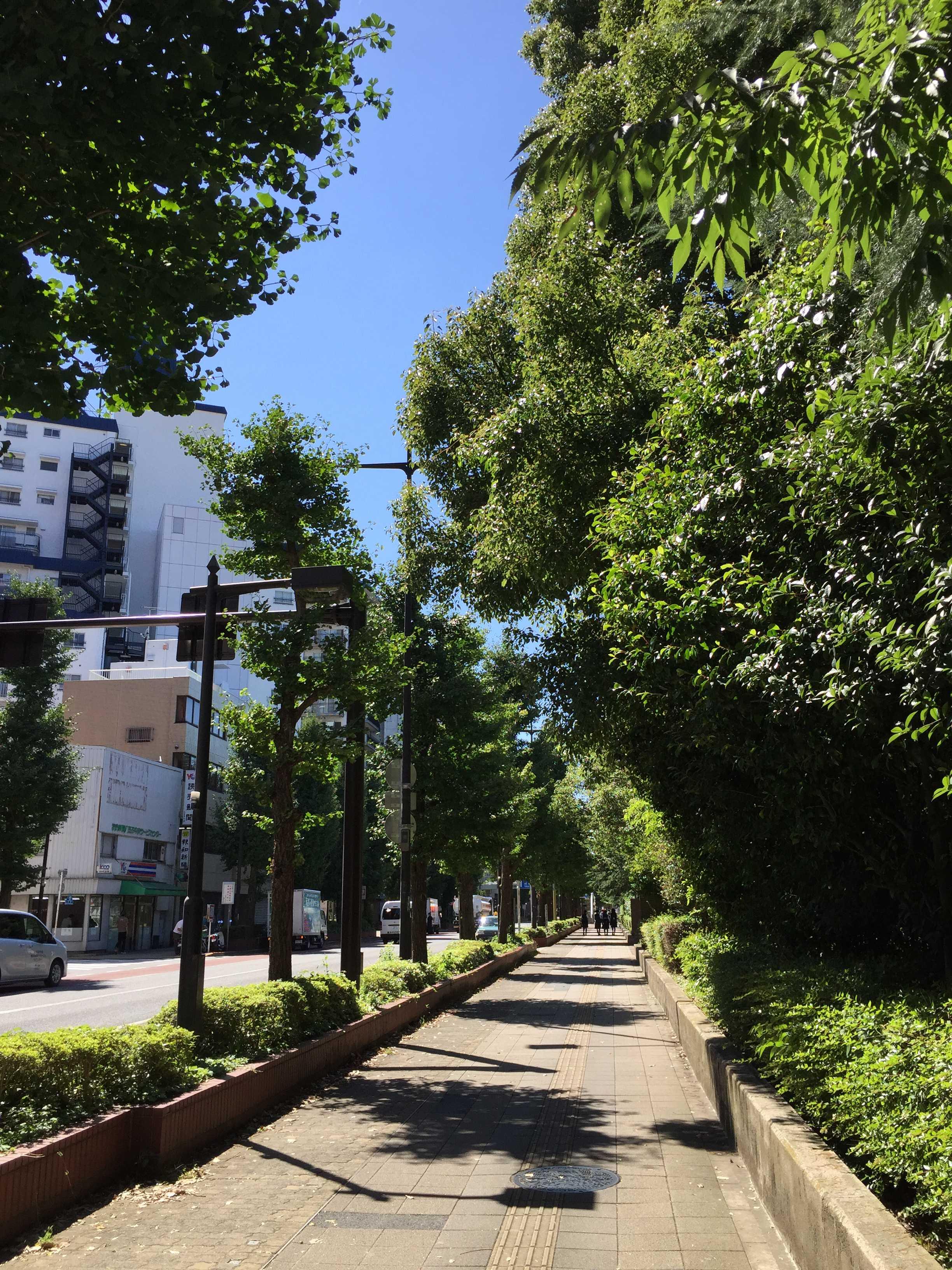 母校・南多摩高校前の道路