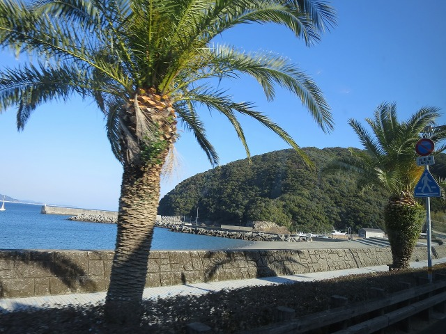 高知の椰子の木
