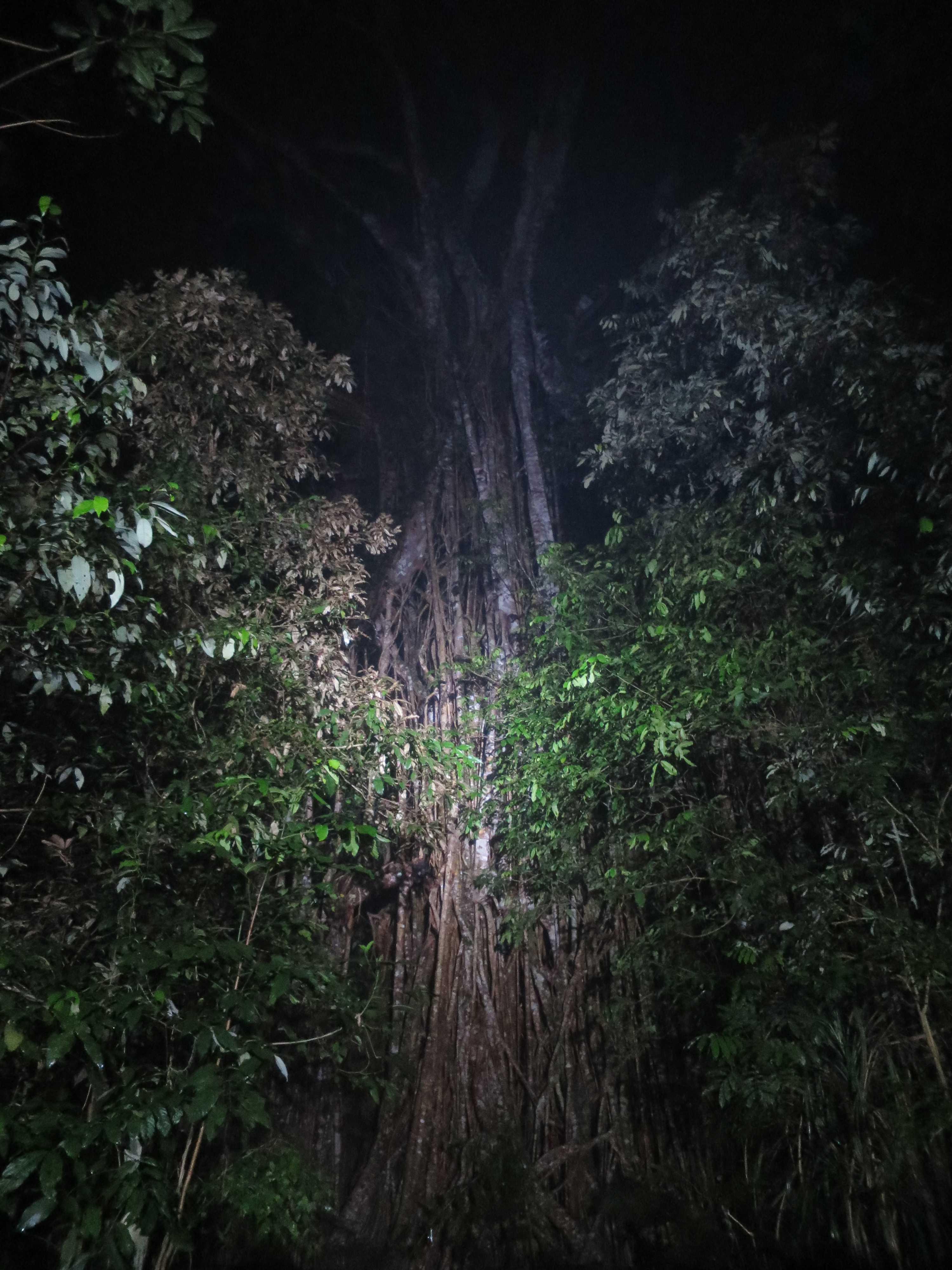 聖堂の樹 下部