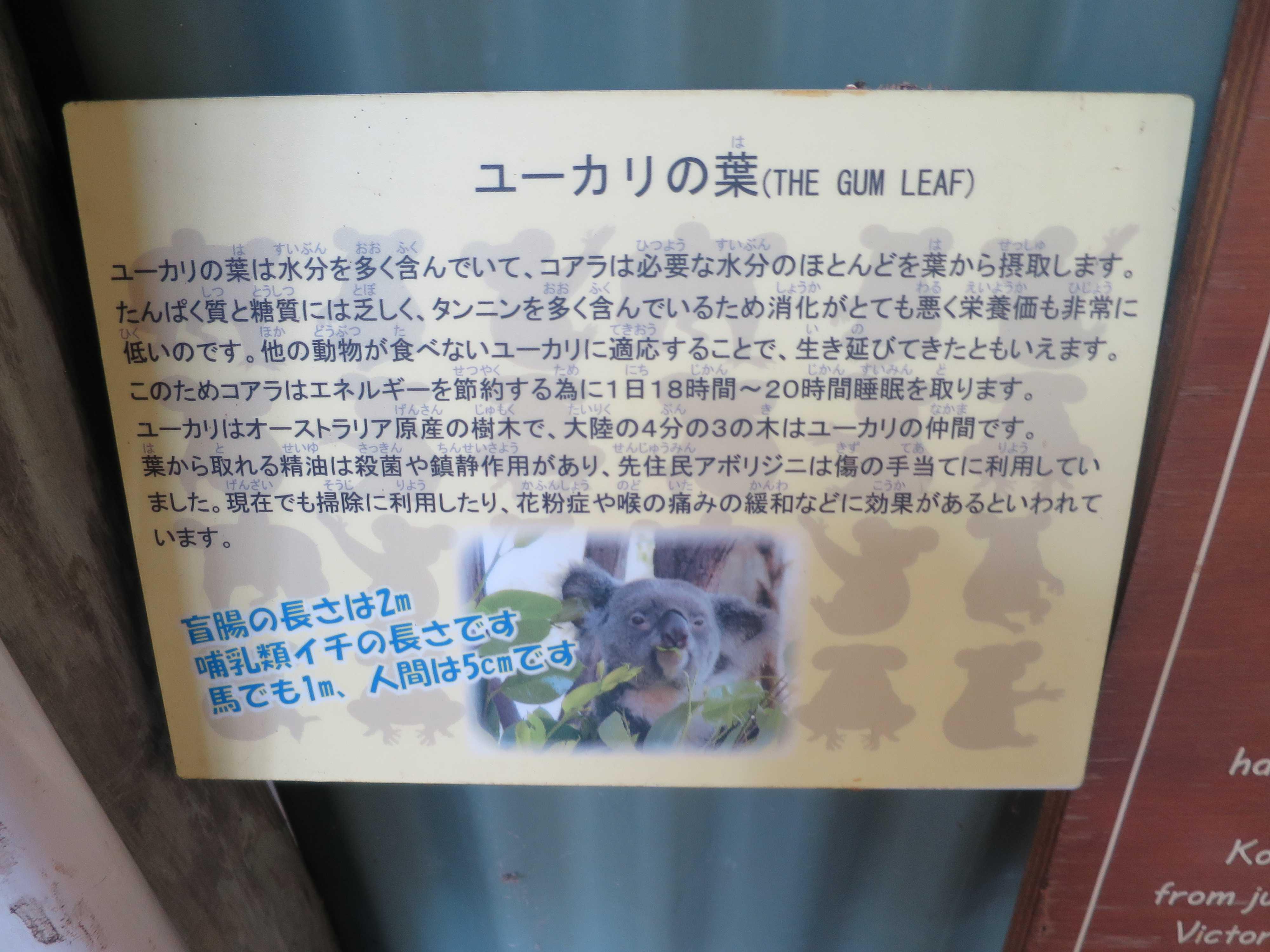 ケアンズ動物園 - ユーカリの葉(THE GUM LEAF)