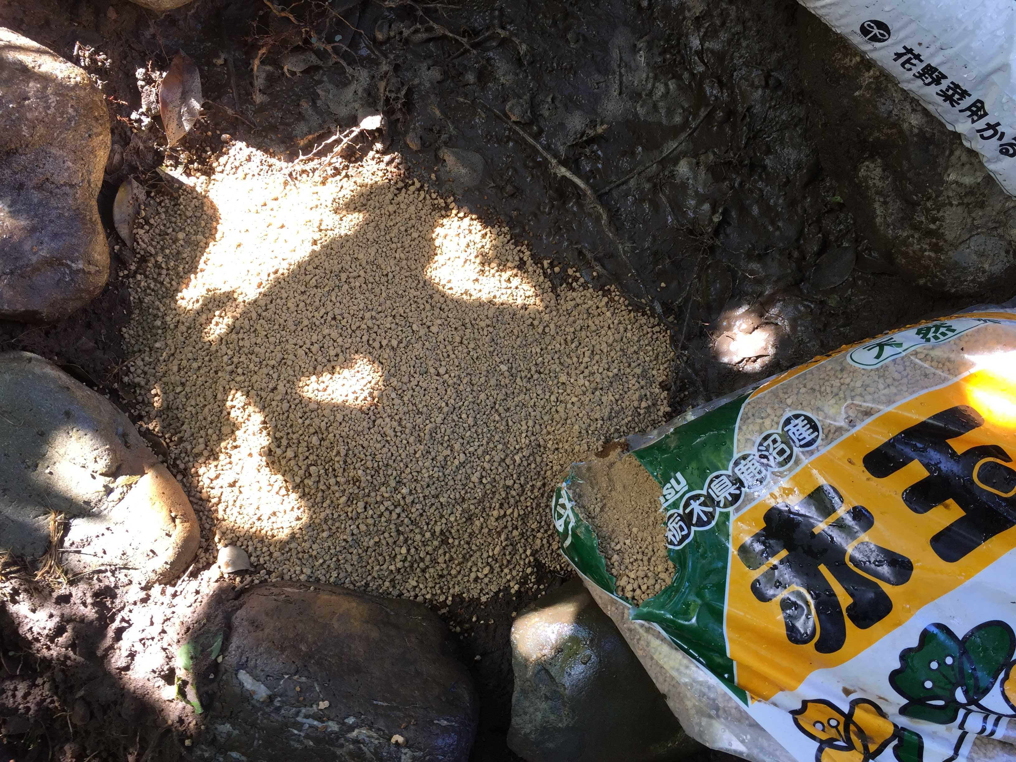 ヤマユリ庭植え - 赤玉土(小粒)