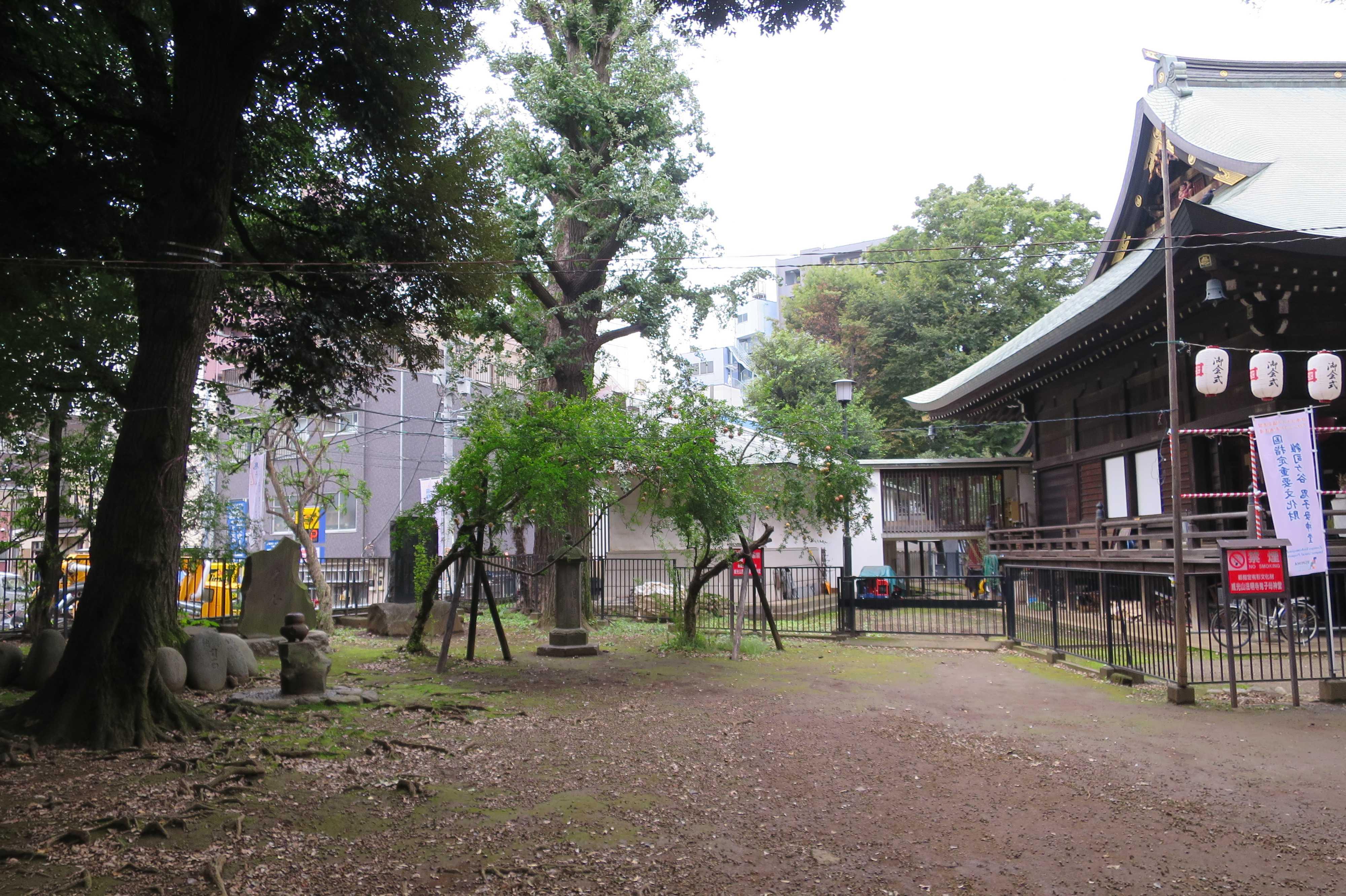 東京 雑司が谷・鬼子母神堂 - お堂の横のザクロの木