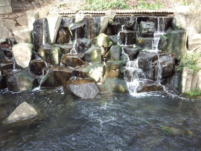 玉川上水の滝