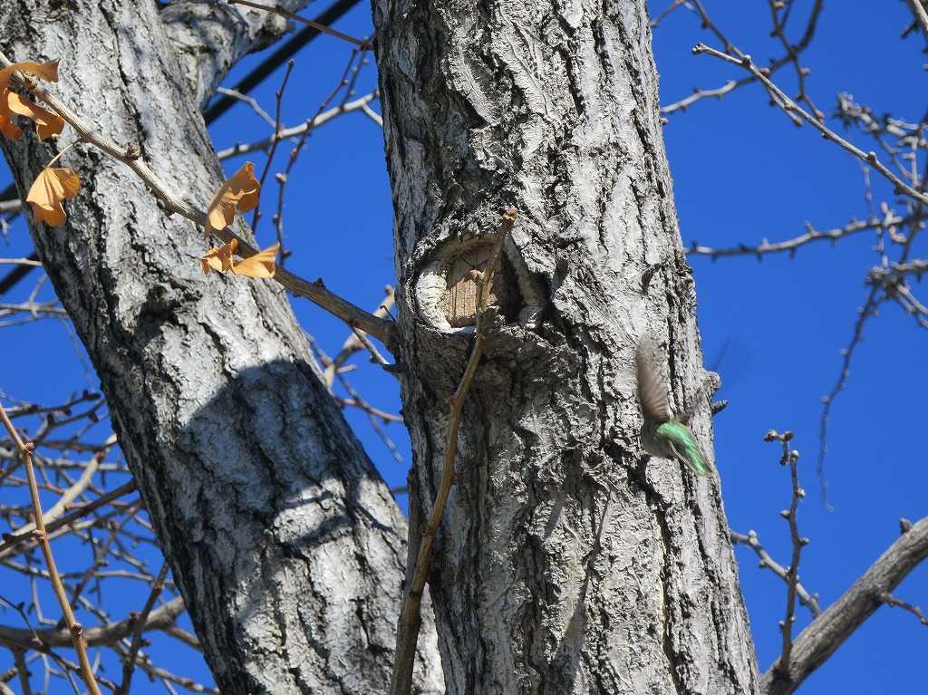 サラトガ・アベニュー - 緑色の鳥