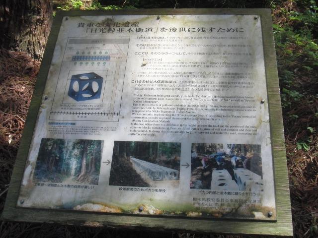 貴重な文化遺産 「日光杉並木街道」を後世に残すために