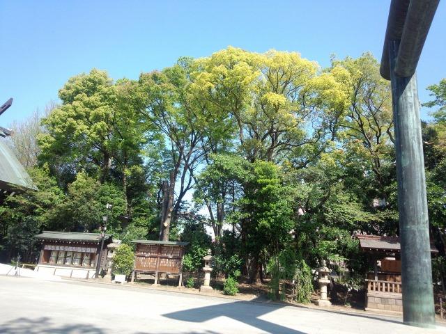 靖国神社の木々の緑