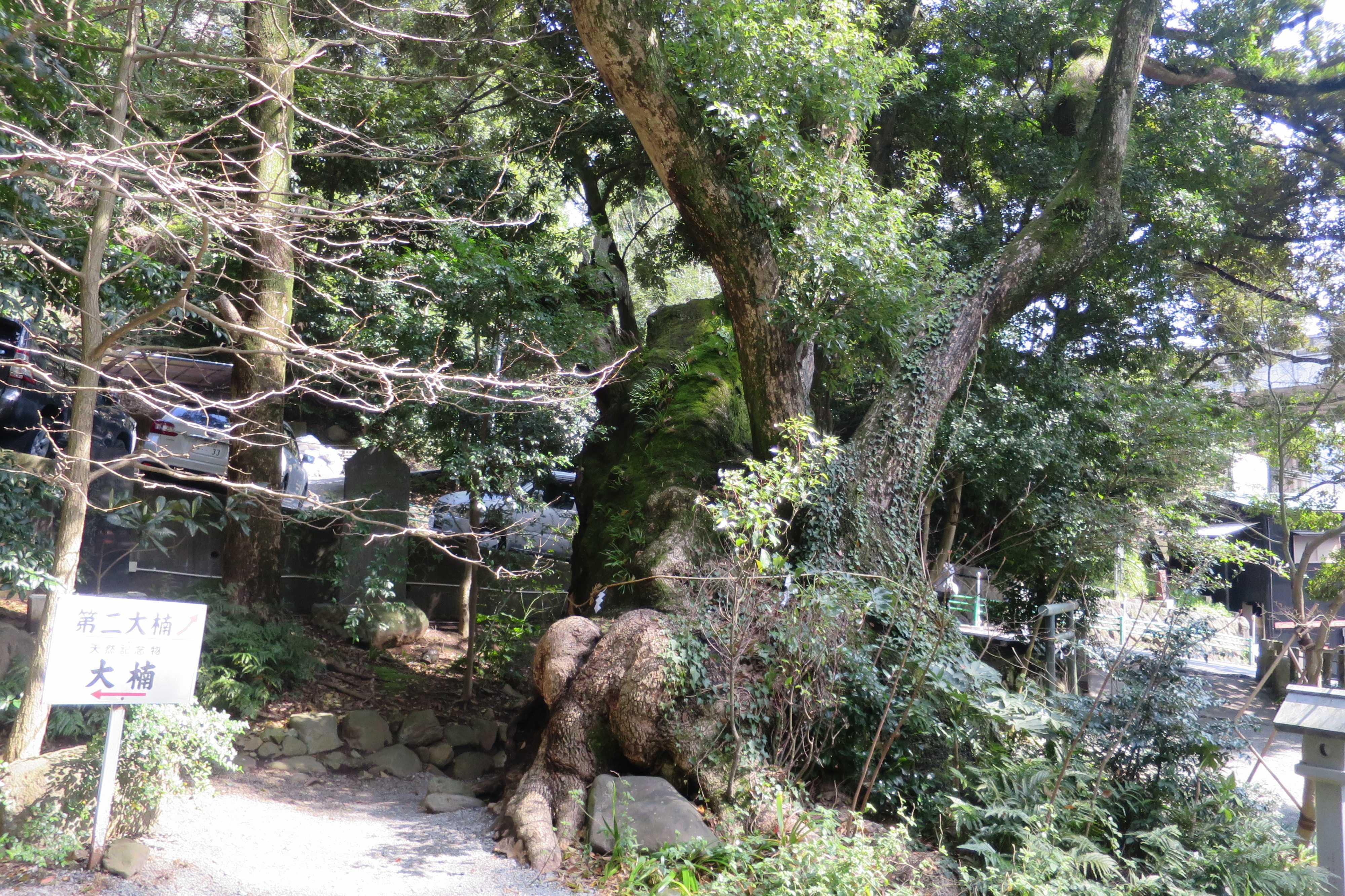 来宮神社 - 第二大楠