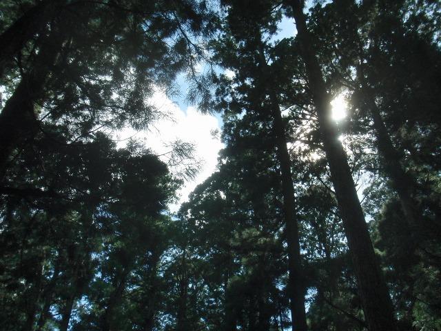奥の院の青空