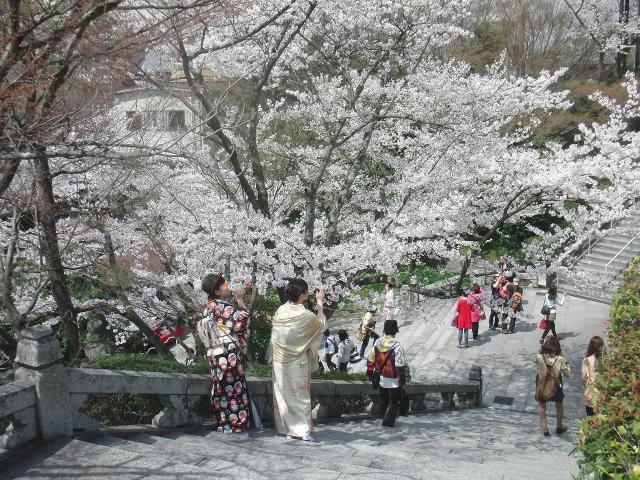 桜満開の京都・清水寺
