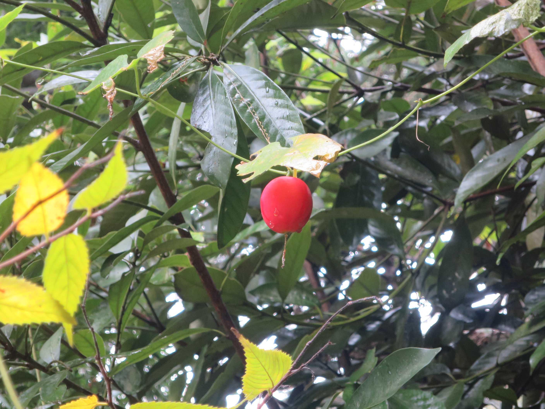 全生園 赤い実