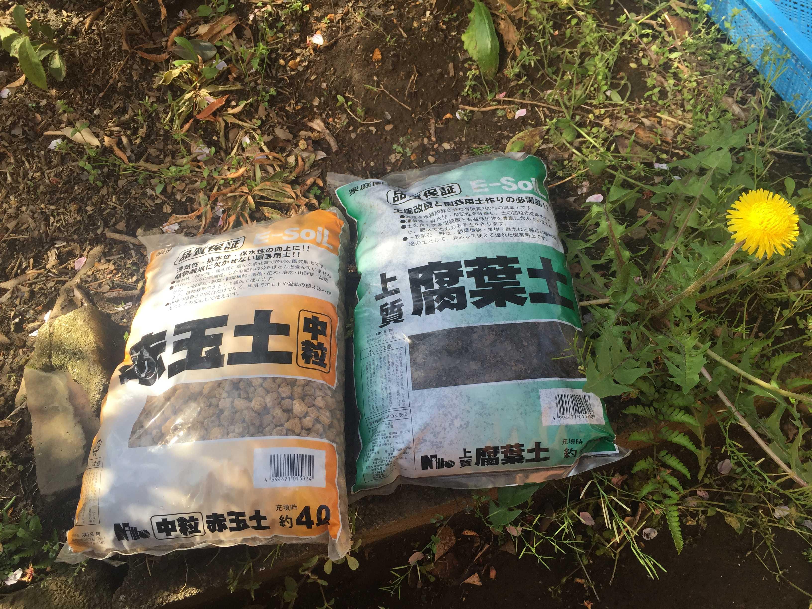 万両 紅孔雀の植え付け - 赤玉土と腐葉土