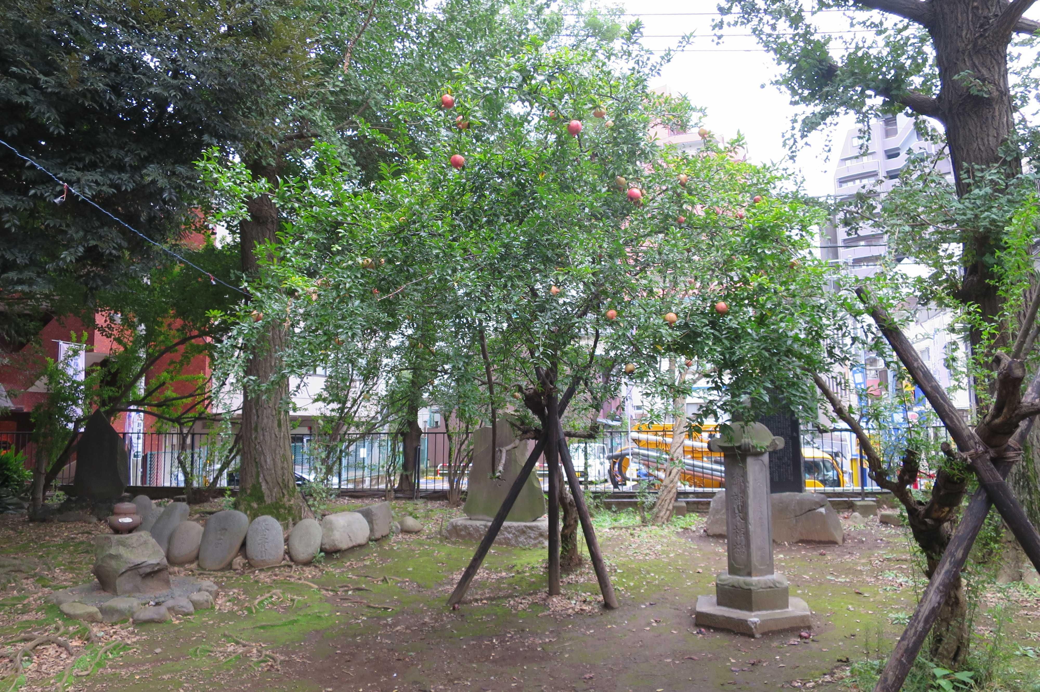 東京 雑司が谷・鬼子母神堂 - お堂の横の柘榴の木