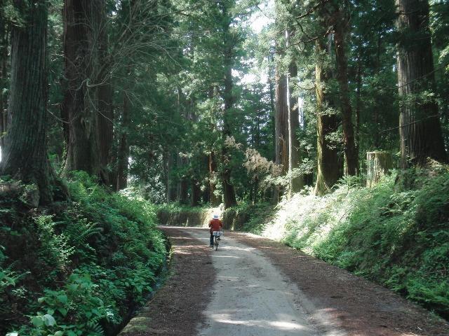 日光杉並木街道を自転車でいくおばさん