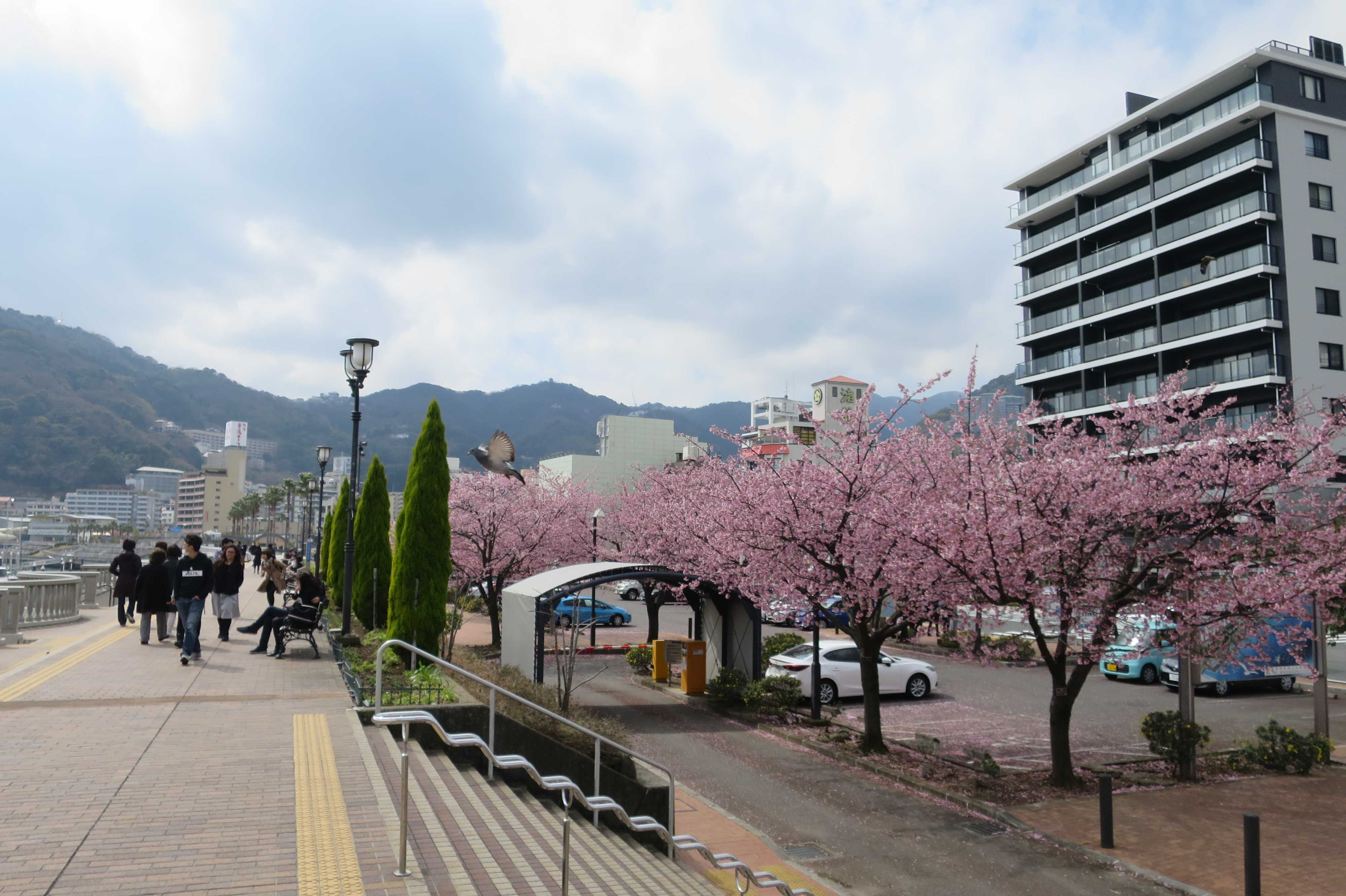 熱海親水公園・スカイデッキ - あたみ桜
