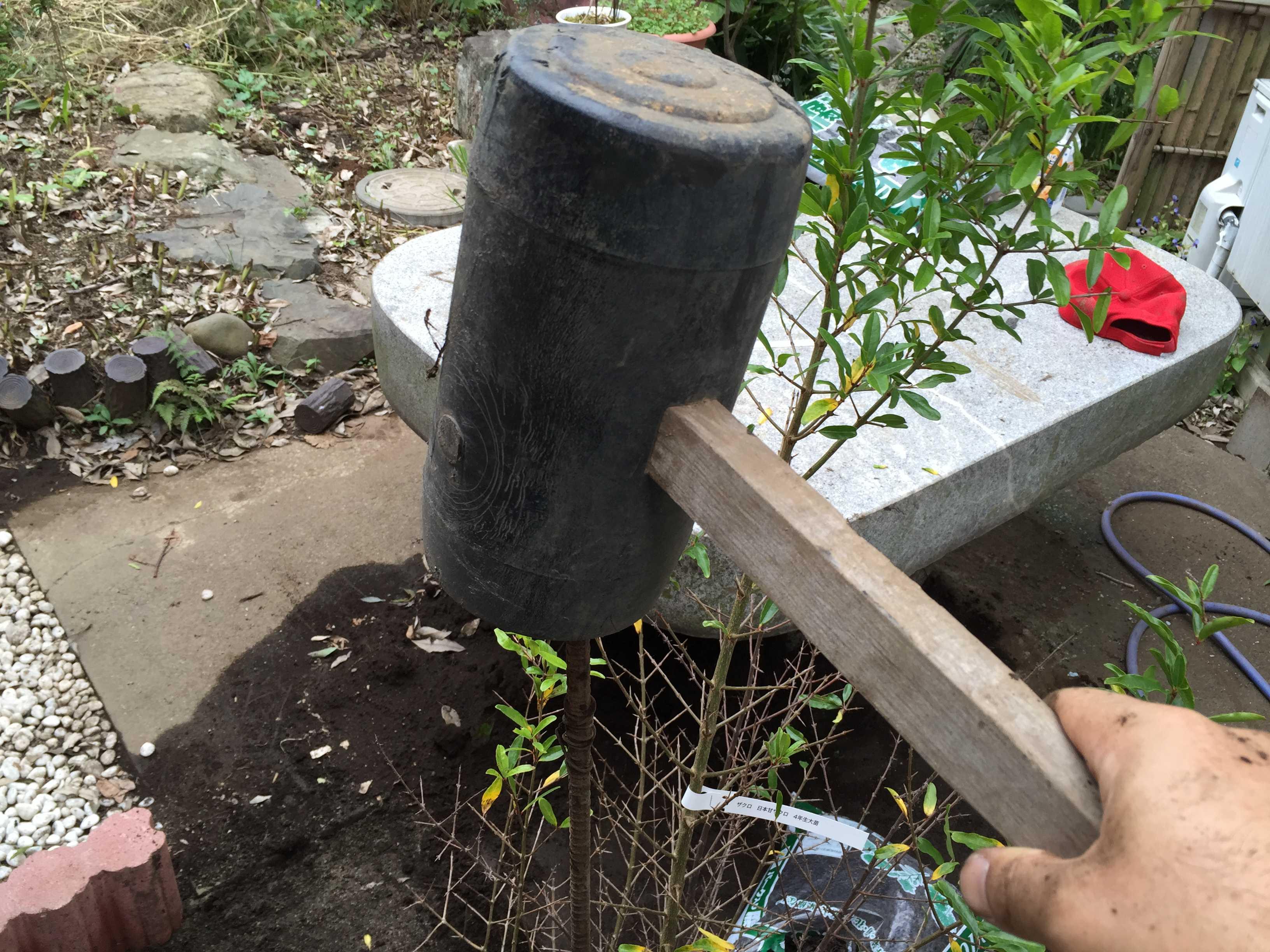 ザクロの植え付け: 支柱立て用のハンマー