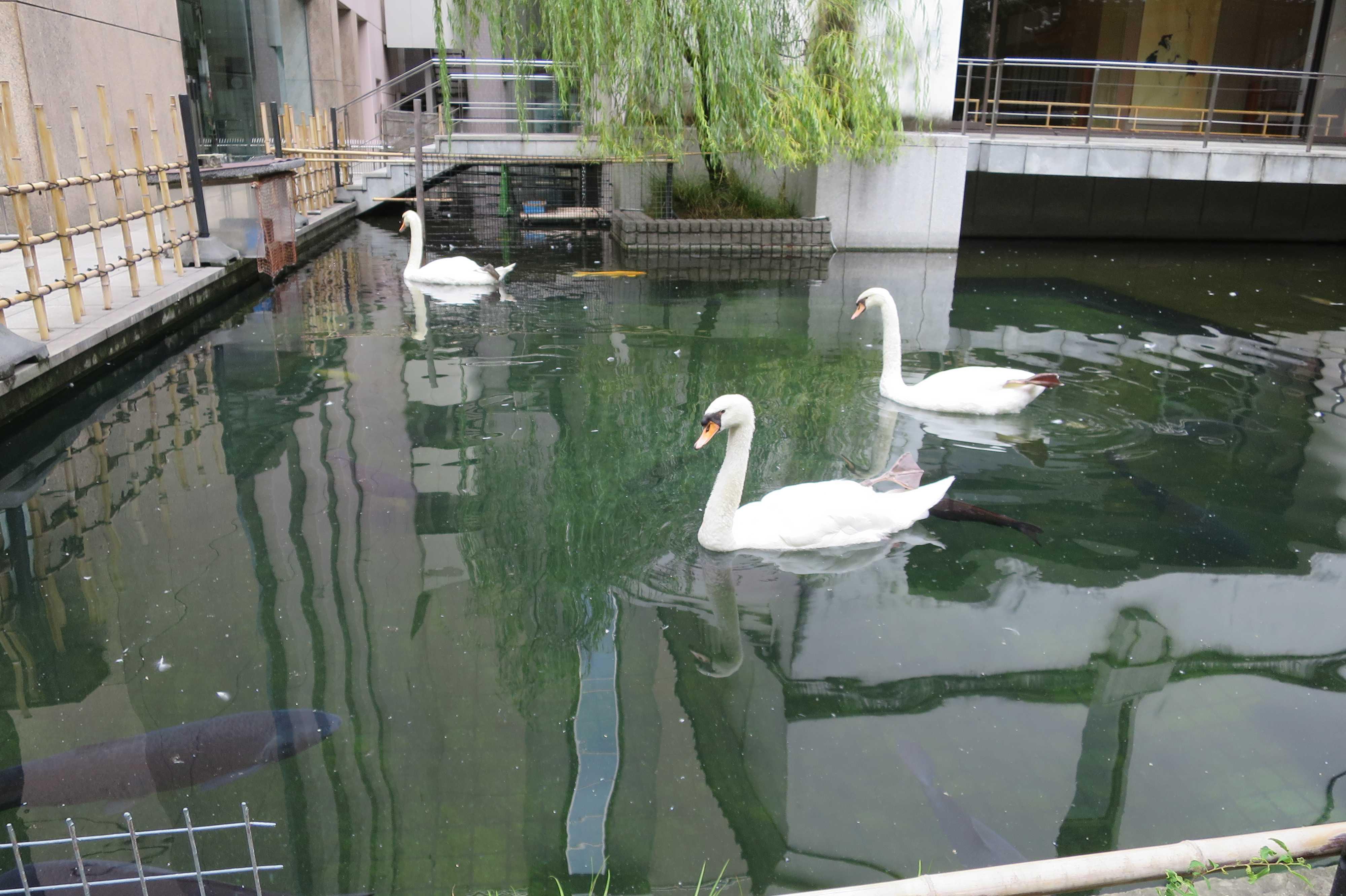 京都・六角堂 - 聖徳太子沐浴の池
