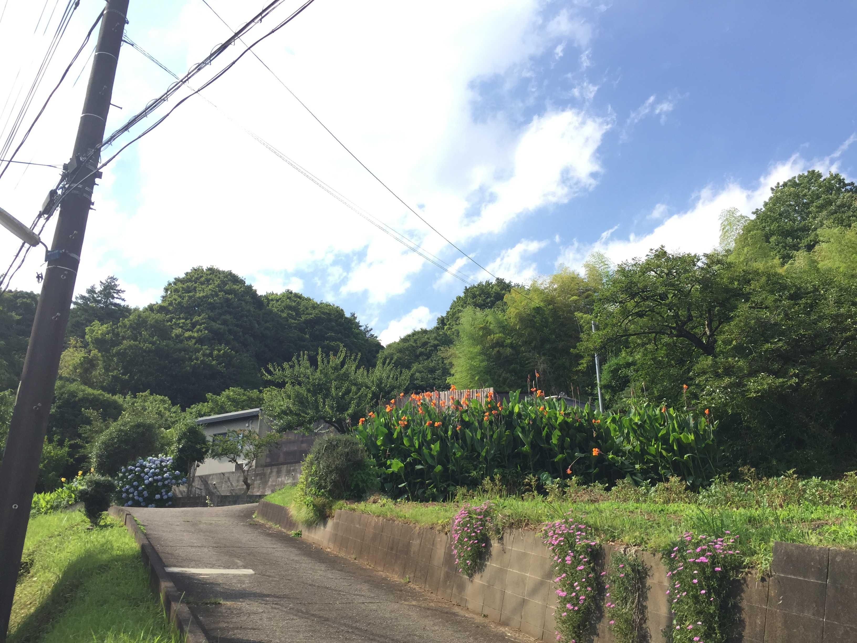 青い空と白い雲、緑の木々