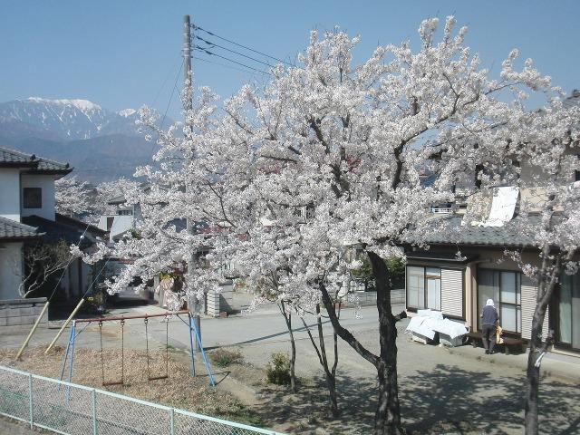 民家の庭先で咲く桜