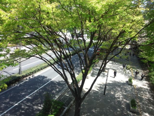 新宿西口の木々の緑