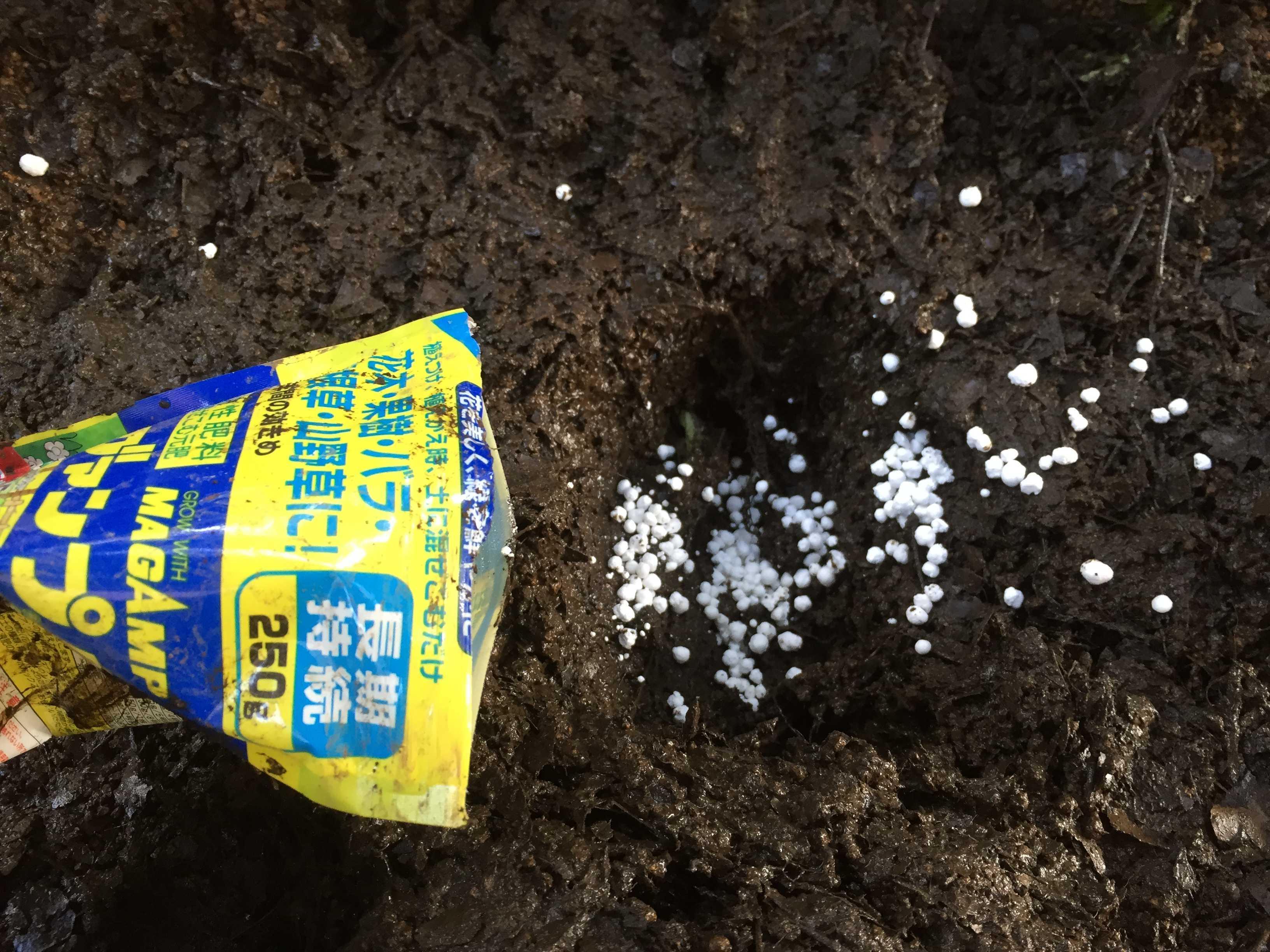 黄実の千両(キミノセンリョウ) の植え付け - マグァンプK