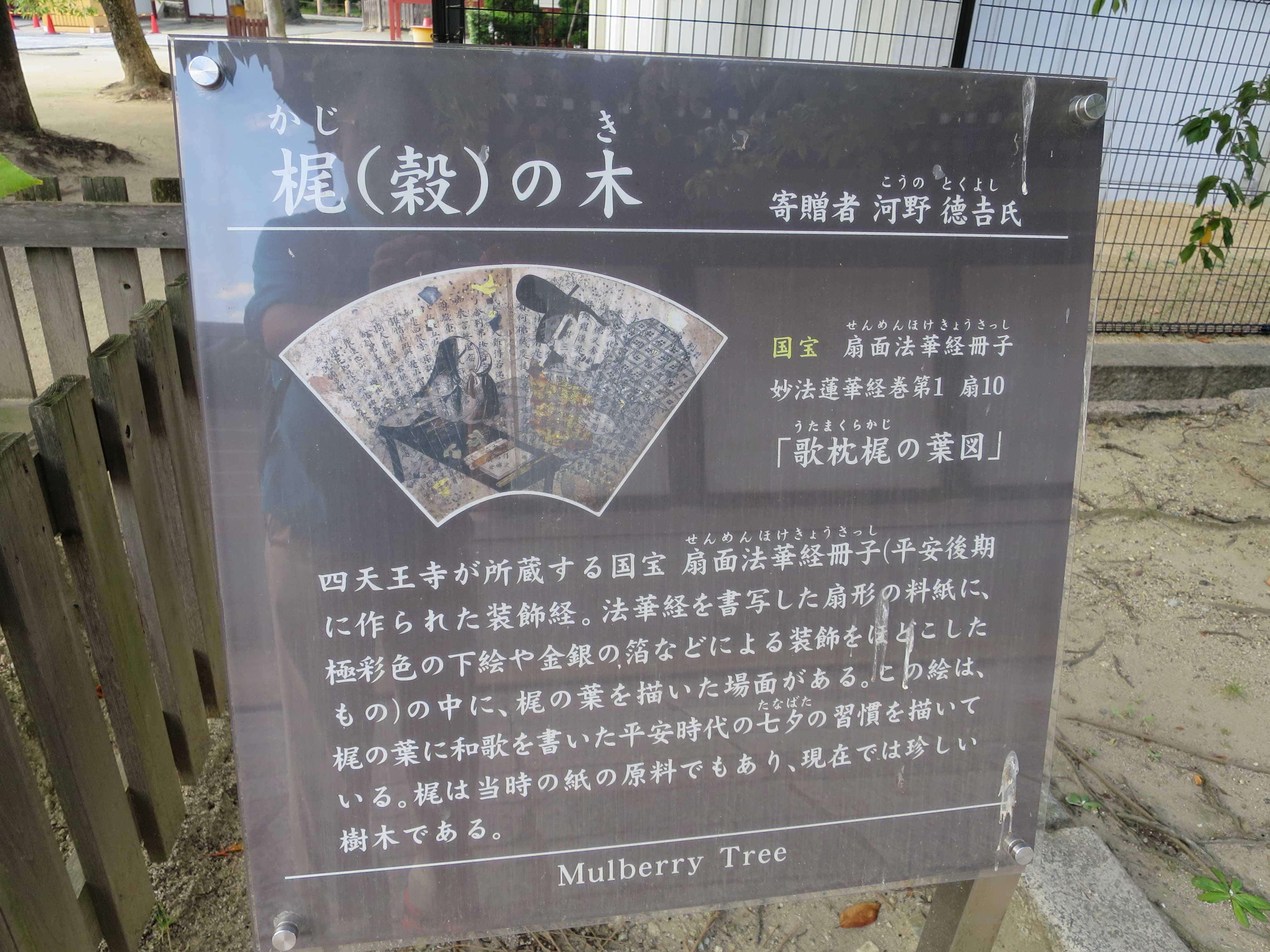 四天王寺 梶(殻)の木
