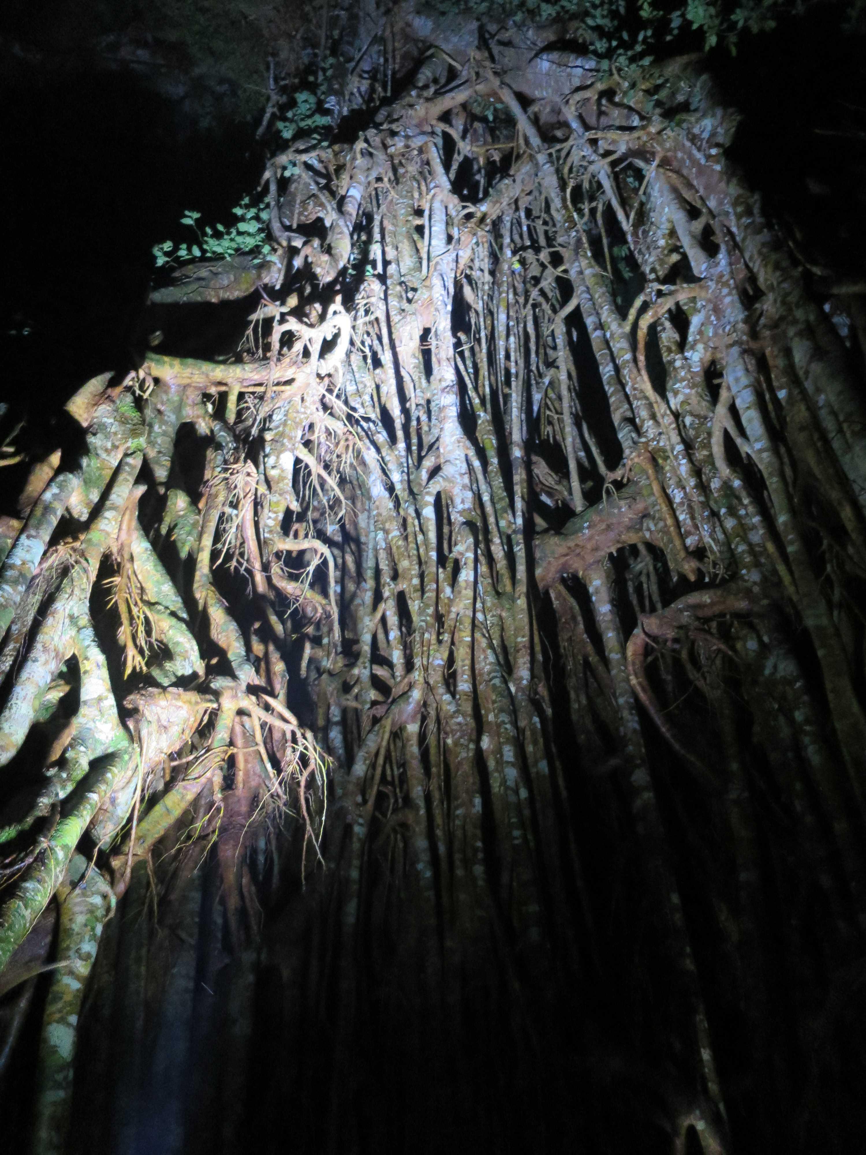 世界最古の熱帯雨林